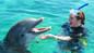 Atlantis Dolphin Cay Deep Water Interaction + Beach