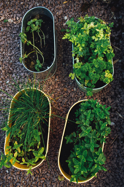 ​The Best Herbs to Grow