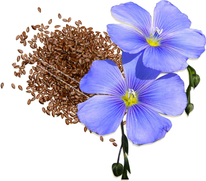 flax-flower.png