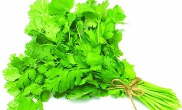 Fresh Veg Coriander/ Cilantro Leaves 2 Count - Fresh Veg