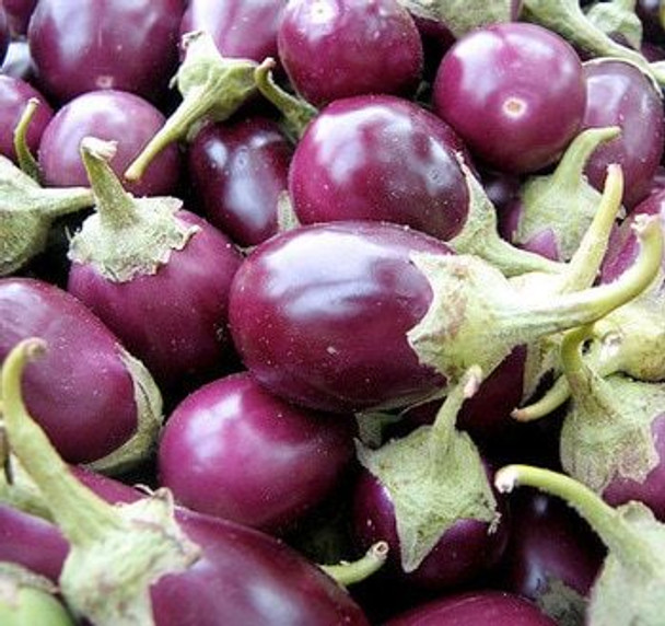 Fresh Veg Indian Round Eggplant 1lb - Fresh Veg