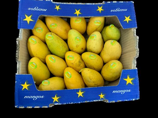 Fresh Mangoes Atalfu 1 Case - 12 Quantity
