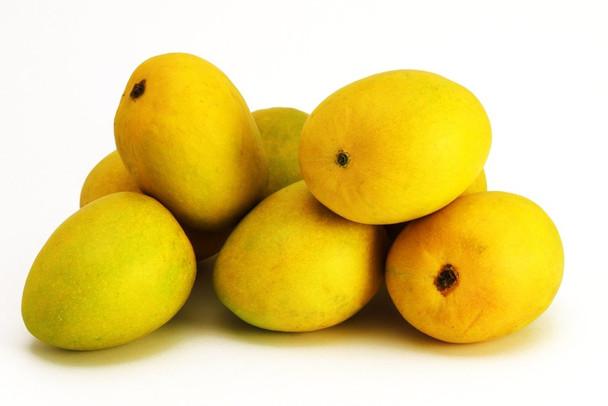 Fresh Indian Mangoes Banganapalli/ Alphonso/Kesar - 1 Case 6 to 10 Mangoes