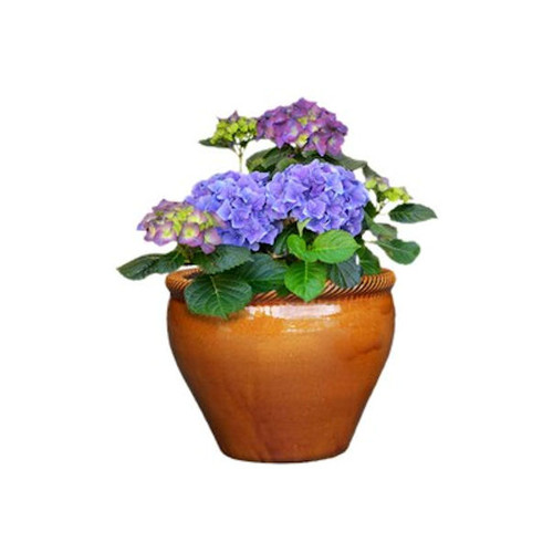 allen + roth 12.4-in x 11.2-in Honey Gold Ceramic Planter