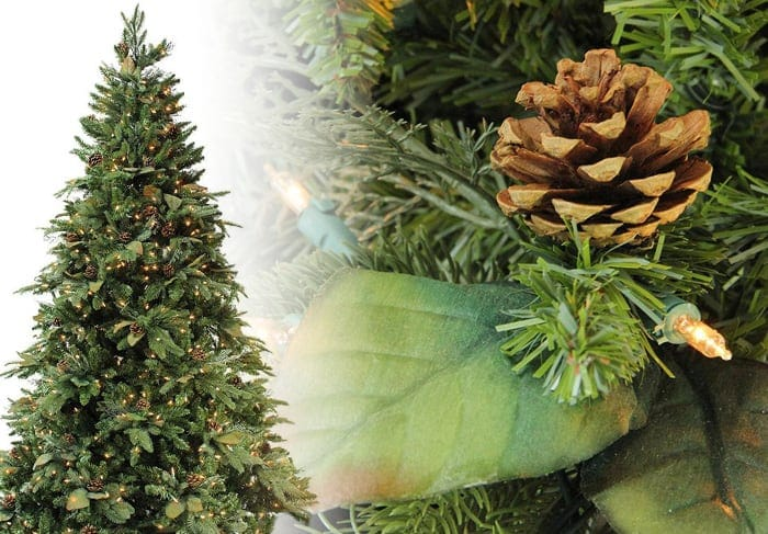 Green River Spruce Christmas Tree Photos