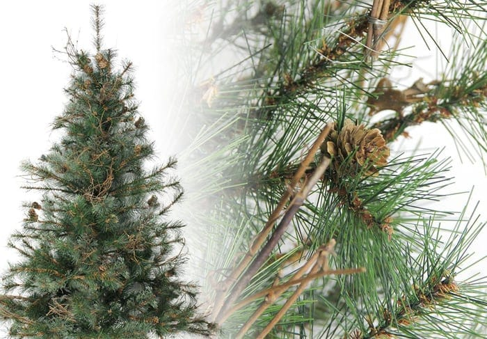 Mixed Country Pine Christmas Tree Photos