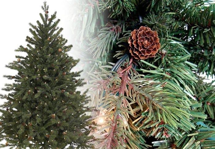 Hunter Fir Christmas Tree Photos title=