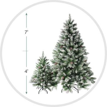 Angel Pine Height