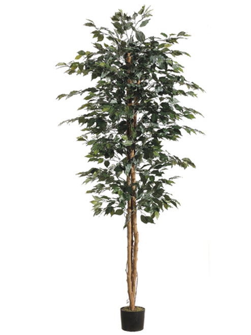 Set of 2 Potted Artificial Decorative Silk Ficus Trees 7' - IMAGE 1