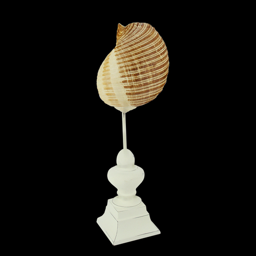 "13.75"" Beach Inspired Brown and Cream Seaside Seashell on Pedestal Finial Decoration - IMAGE 1"