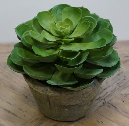 "6.75"" Green and Brown Potted Artificial Echeveria Succulent Plant - IMAGE 1"