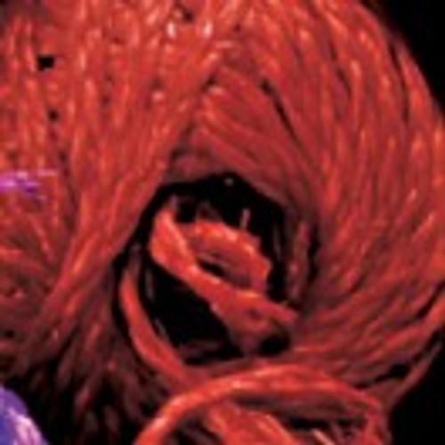 "Red Braided Snail Bundled Ribbon 3.1"" x 280 Yards - IMAGE 1"