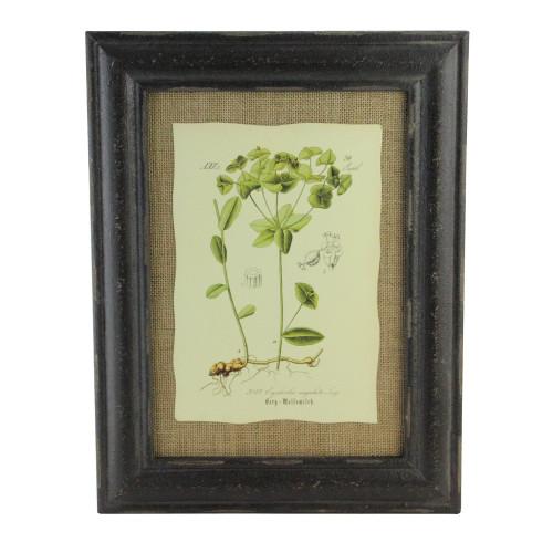 "16.5"" Botanic Beauty Decorative Euphorbia Angulata Print with Burlap Accent Framed Wall Art - IMAGE 1"