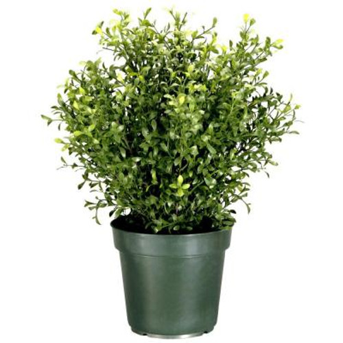 "30"" Potted Artificial Realistic Argentea Jade Plant - IMAGE 1"
