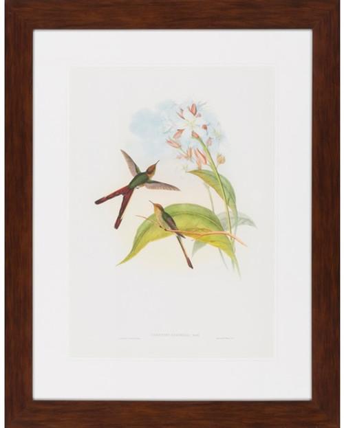 "26"" x 33"" Framed Gould Humming Bird Wall Art Decor - IMAGE 1"