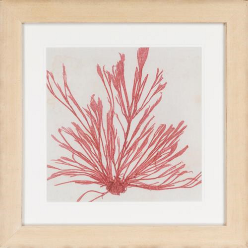 "24"" x 24"" Framed Rouge Pink Brilliant Seaweed Wall Art Decor - IMAGE 1"