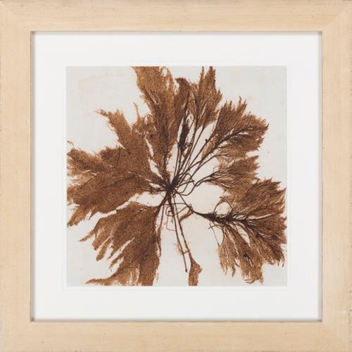 "24"" x 24"" Framed Caramel Brown Brilliant Seaweed Wall Art Decor - IMAGE 1"