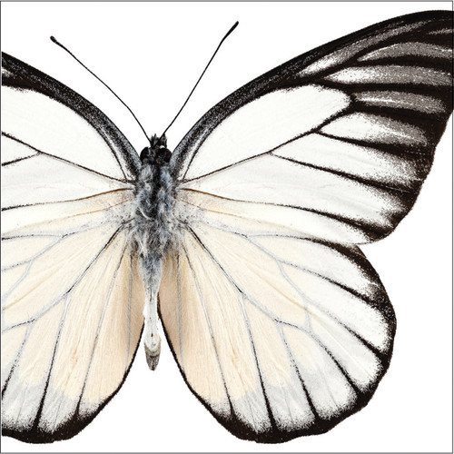 """Club Pack of 288 Gray and White Butterfly 3-Ply Disposable Beverage Napkins 5"""" - IMAGE 1"""