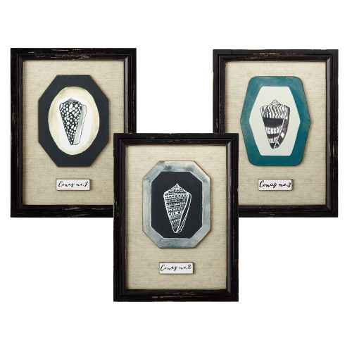 "Set of 3 Black and Beige Hanging Framed Different Conus Shell Wall Art Decors18.75"" - IMAGE 1"