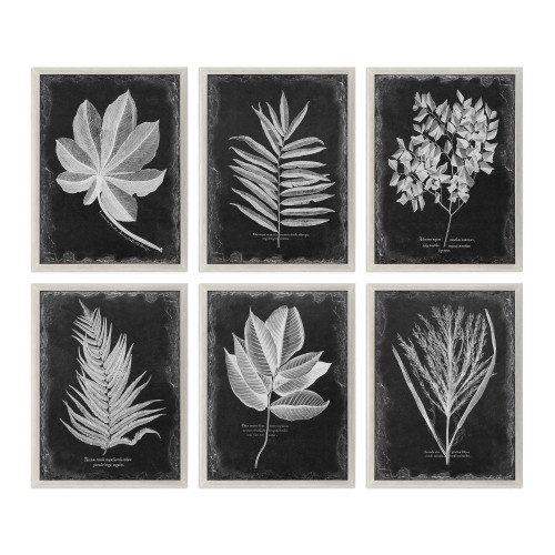 """Set of 6 Champagne Silver Framed Wall Decoration Prints 33.75"""" - IMAGE 1"""