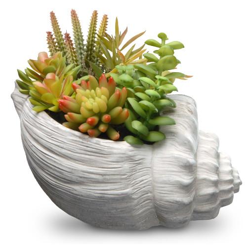 """9.8"""" Succulent Plants - Ceramic Pot - IMAGE 1"""