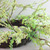 Berry Twig Artificial Wreath, Green and Brown 12-Inch - IMAGE 2