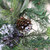 Mixed Pine with Blueberries Pine Cones and Ice Twigs Artificial Christmas Wreath - 24-Inch, Unlit - IMAGE 2