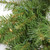 Pre-Lit Essex Pine Artificial Christmas Wreath - 24-Inch, Clear Lights - IMAGE 2