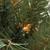 7.5' Pre-Lit Medium Niagara Pine Artificial Christmas Tree - Clear Lights - IMAGE 2