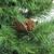 6.5' Full Dakota Red Pine with Pine Cones Artificial Christmas Tree - Unlit - IMAGE 2