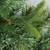 4.5' Ashcroft Cashmere Pine Artificial Christmas Tree- Unlit - IMAGE 2