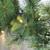 "50' x 14"" Pre-Lit Ashcroft Cashmere Pine Artificial Christmas Garland- Warm White LED Lights - IMAGE 2"