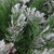 """24"""" Green and Brown Flocked Angel Pine with Pine Cones Artificial Christmas Wreath - Unlit - IMAGE 3"""
