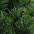 """32"""" Green Lush Mixed Pine Artificial Christmas Swag - Unlit - IMAGE 2"""