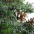 4' Snowy Delta Pine with Pine Cones Full Artificial Christmas Tree - Unlit - IMAGE 4