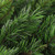 Lush Mixed Pine Artificial Christmas Wreath - 24-Inch, Unlit - IMAGE 2