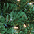 5' Pre-Lit Olympia Pine Commercial Artificial Christmas Wreath - Clear Lights - IMAGE 2