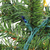 "9' x 12"" Pre-Lit Canadian Pine Artificial Christmas Garland - Multi Lights - IMAGE 3"