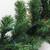 "9' x 10"" Pre-Lit Oak Creek Pine Artificial Christmas Garland - Multi Lights - IMAGE 2"