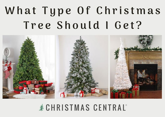 What Type of Christmas Tree Should I Get?