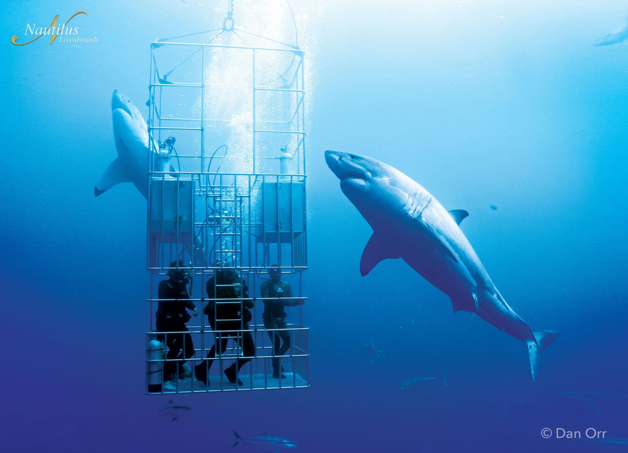 guadalupe-great-white-sharks-006-min-2.jpg