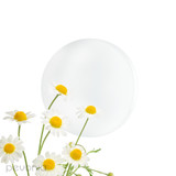 Phyto-Aromatic Mist