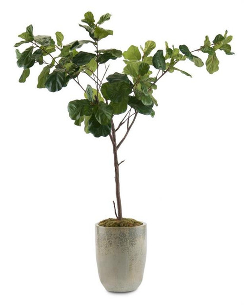 "102"" John Richard Fiddle-Leaf Fig B Planter - 1"