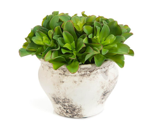 "14"" John Richard Monaco Succulents Planter - 1"