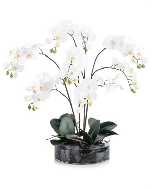 "29"" John Richard Midnight Phals Planter - 1"