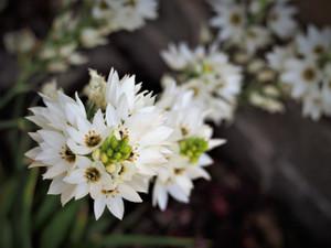 Flowers of Spring (Ocean Grove)