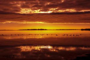 Sunrise Swan Bay May 2018