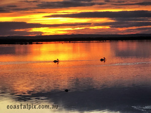 Pelicans on the Barwon River at sunset June19