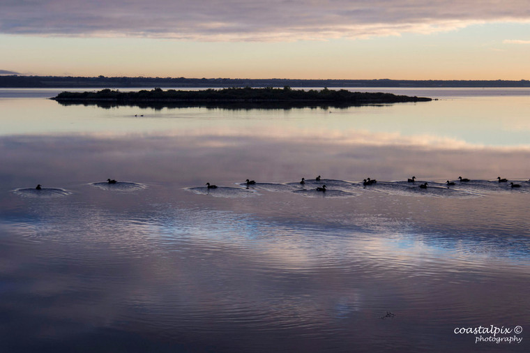 Winter Reflections as the ducks paddle across Swan Bay (Queenscliff)