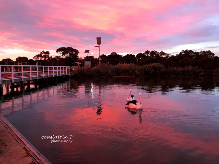 Barwon River Sunset with the Pelicans : Winter 2018